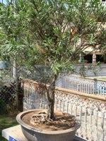 Bonsai Tree Bottle Brush Design